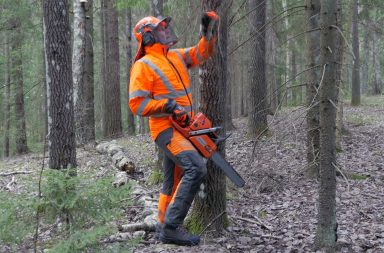 Logger with chainsaw and protective trousers