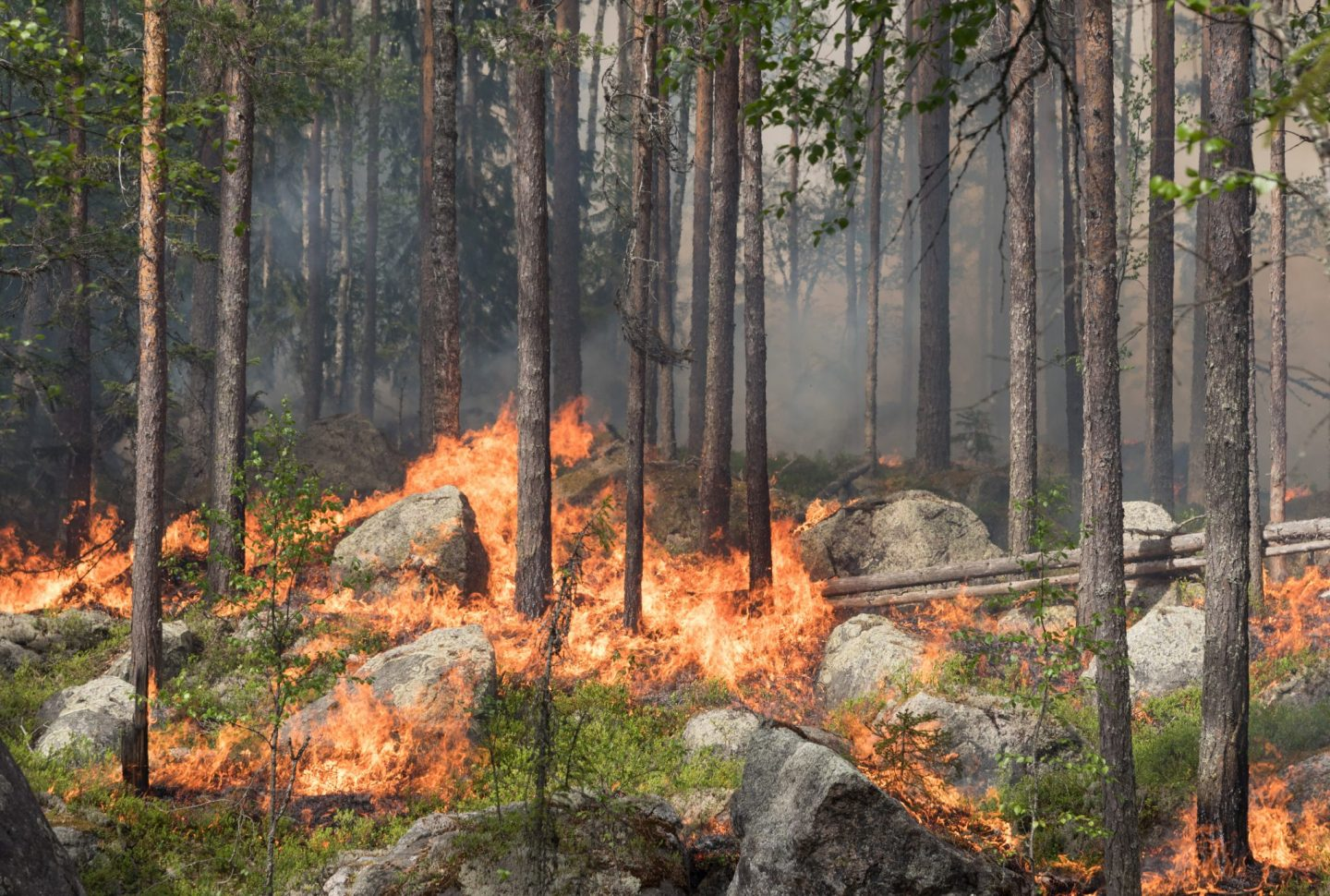 Forest fires in Sweden - huge areas burned in 2018