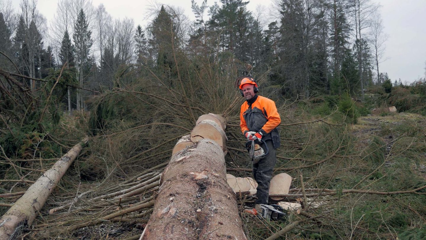 Stihl MS 500i - Test of the first chainsaw with fuel