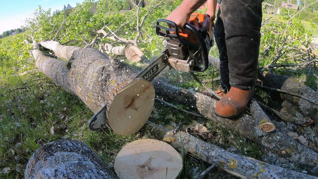 Cookie Cutting with the Stihl MS 500i
