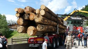 skidder lescognees full tree trunks