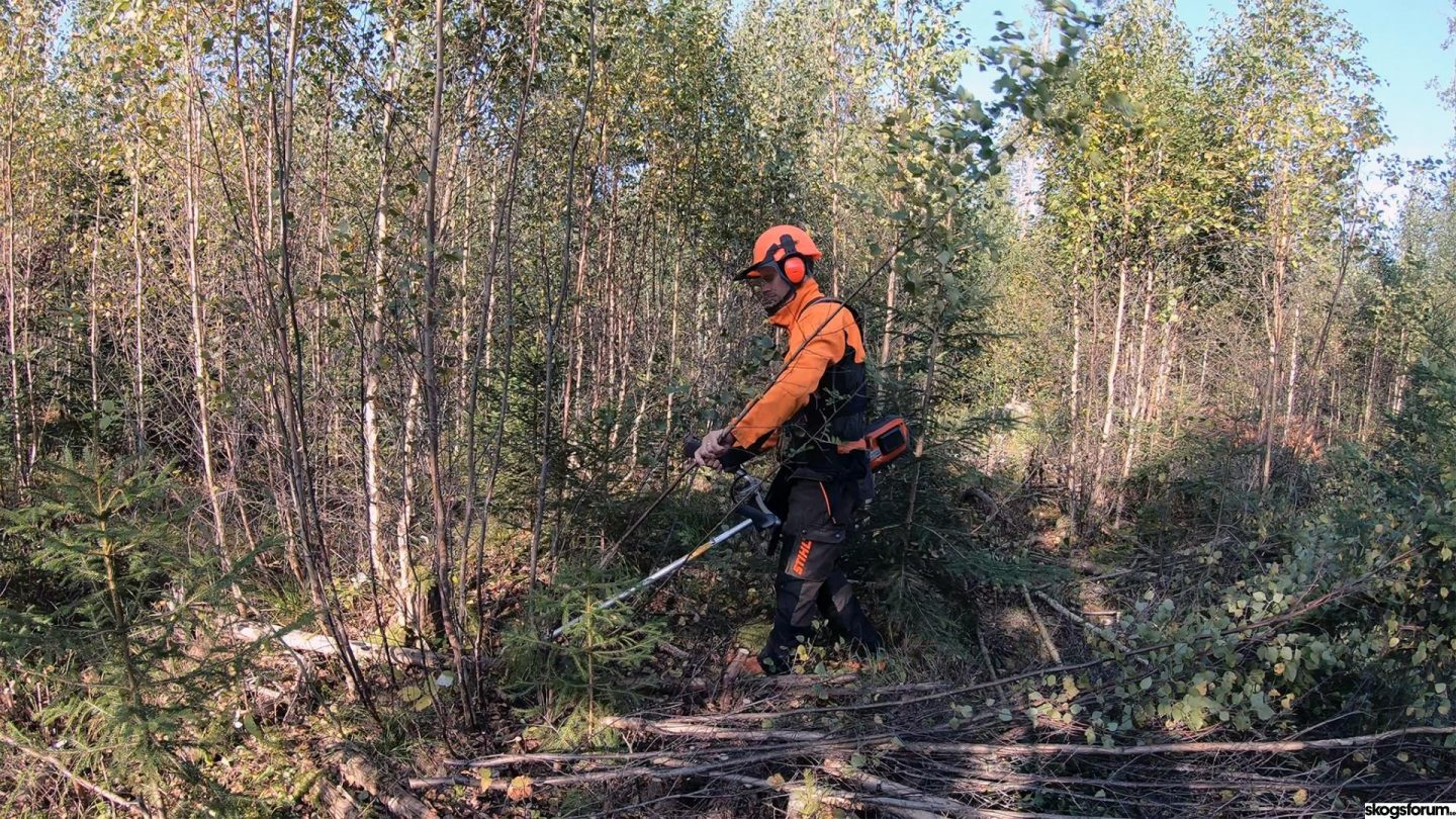 Are battery-driven saws good for professionals in young forest clearing?