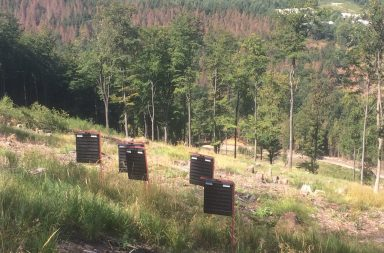 bark beetle traps
