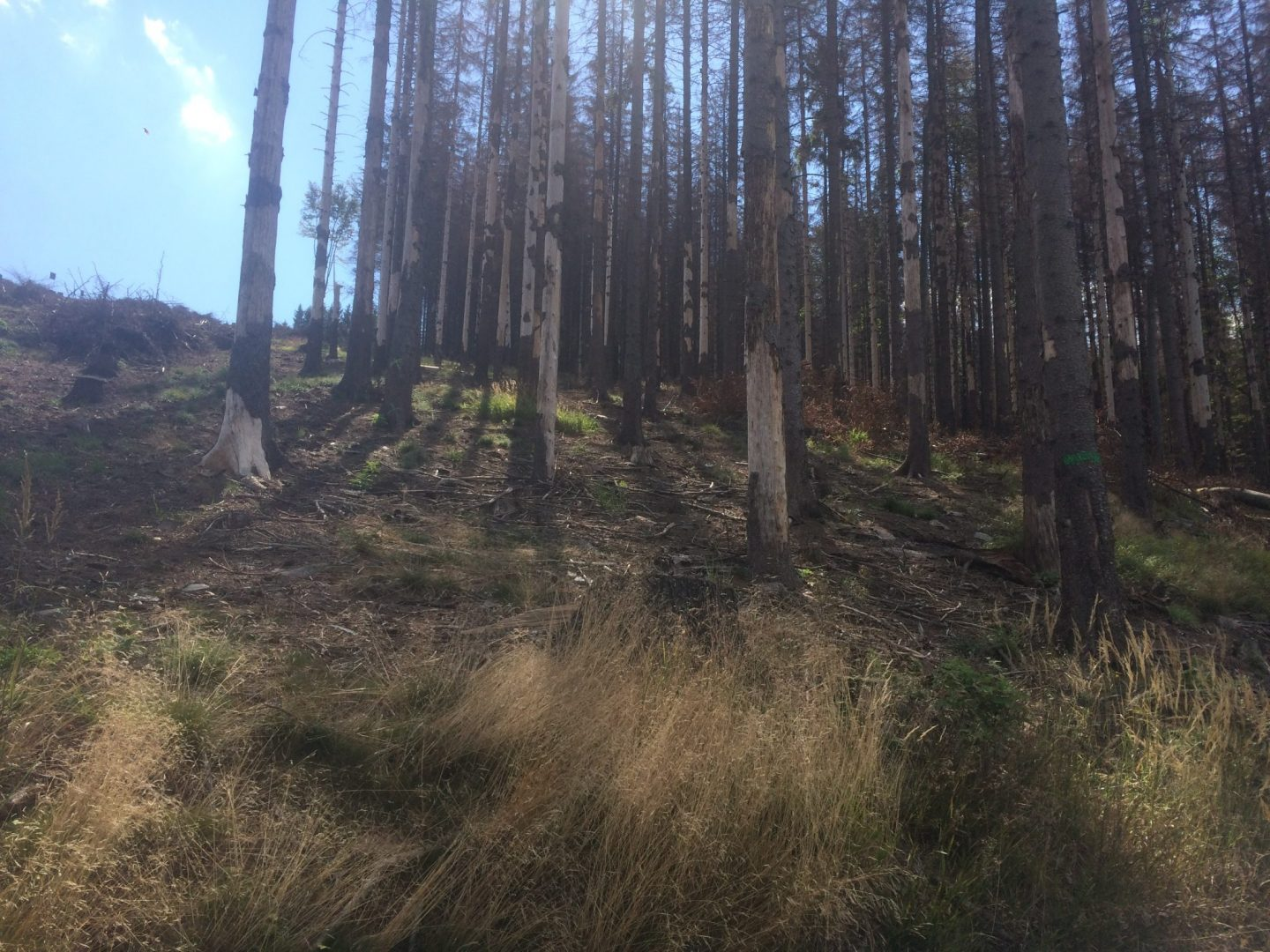 Extended exemption for chemical treatment against the bark-beetle