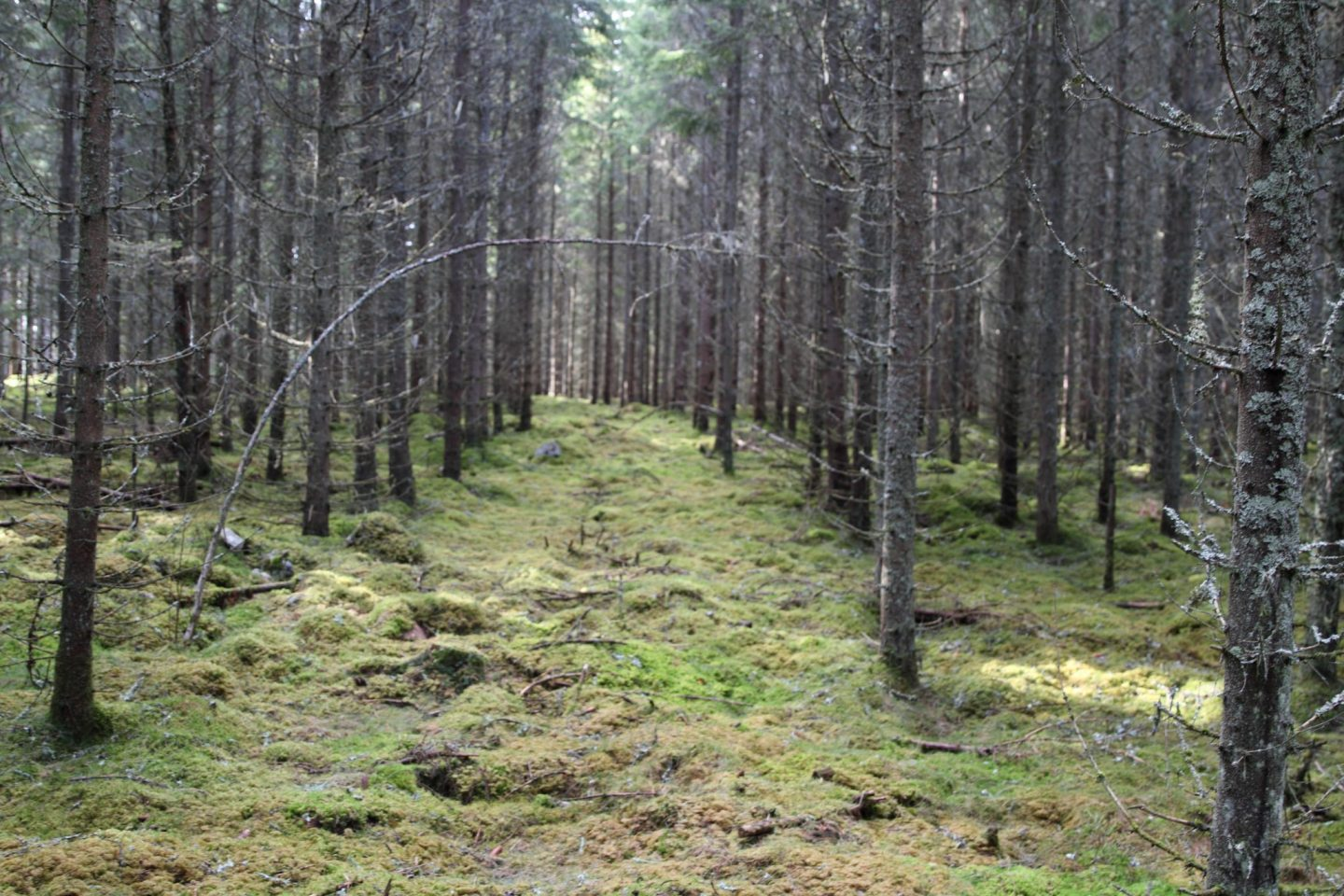 Swedish Forestry #5 – Who owns the Swedish forest?