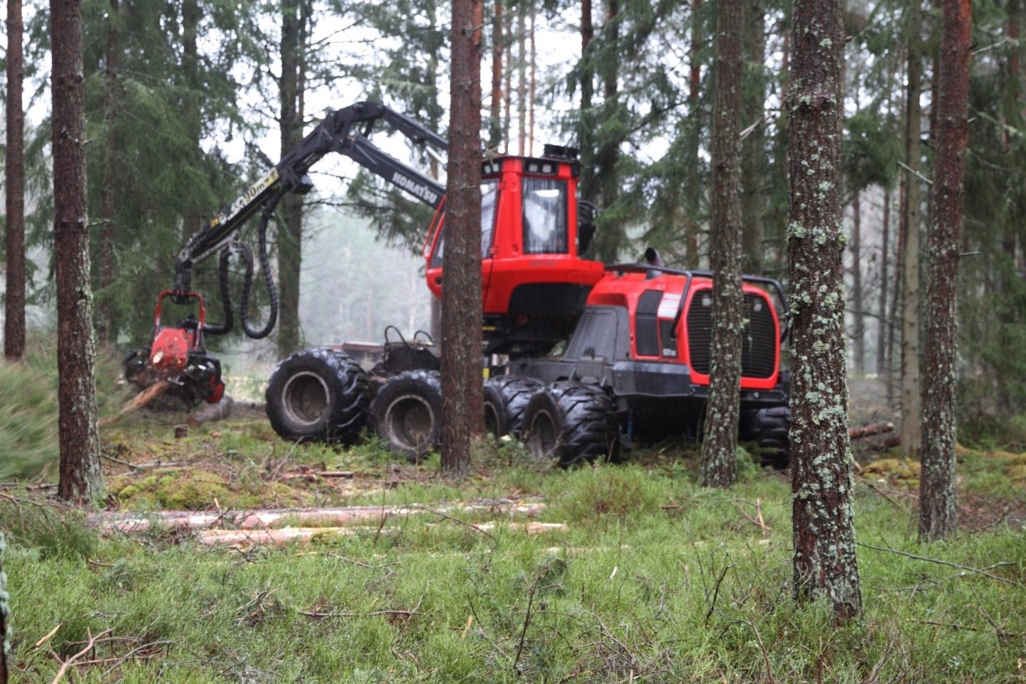 Commercial thinning - Swedish Forestry #7
