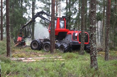 commercial thinning