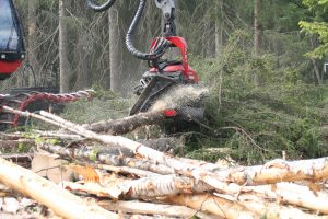forestry and logging