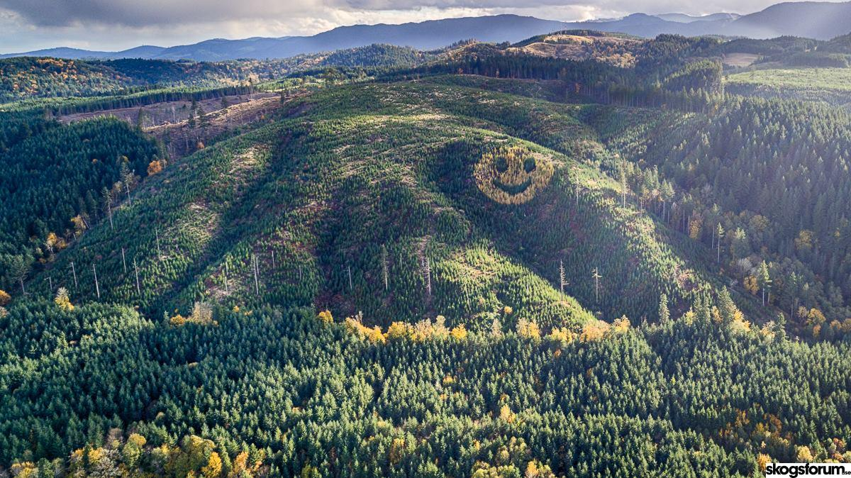 The World's largest smiley is in the forest