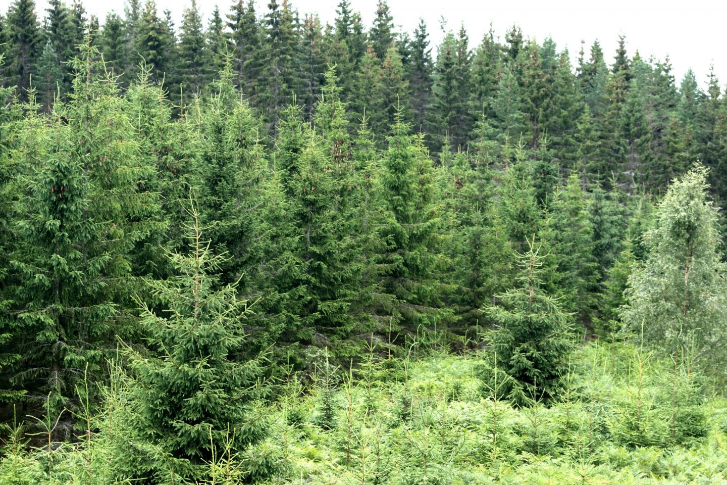 Does the carbon sink have a financial value?