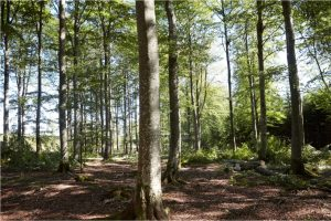 IKEA launches new forest agenda
