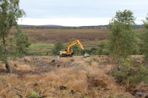 Five new trees for every Scotsman