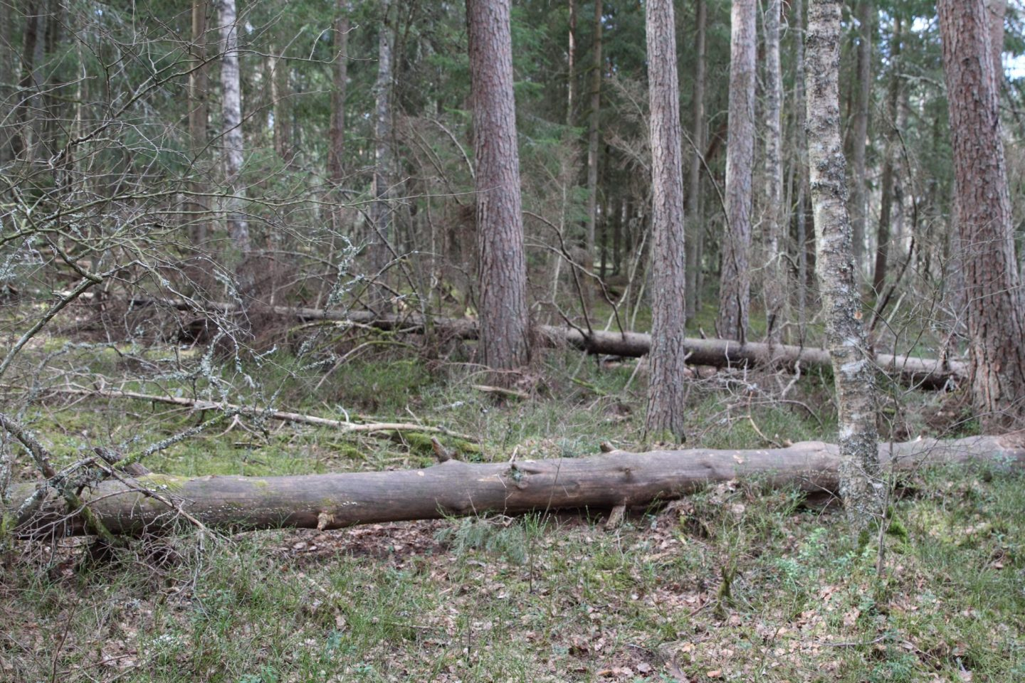 Protected forest – What is that?