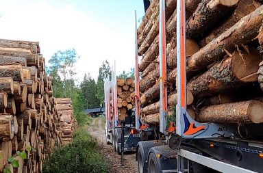 will the boost in forest industry go on