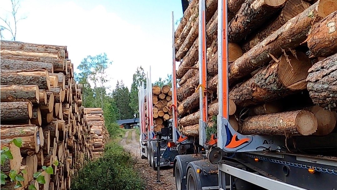 How long will the boost in forest industry go on?