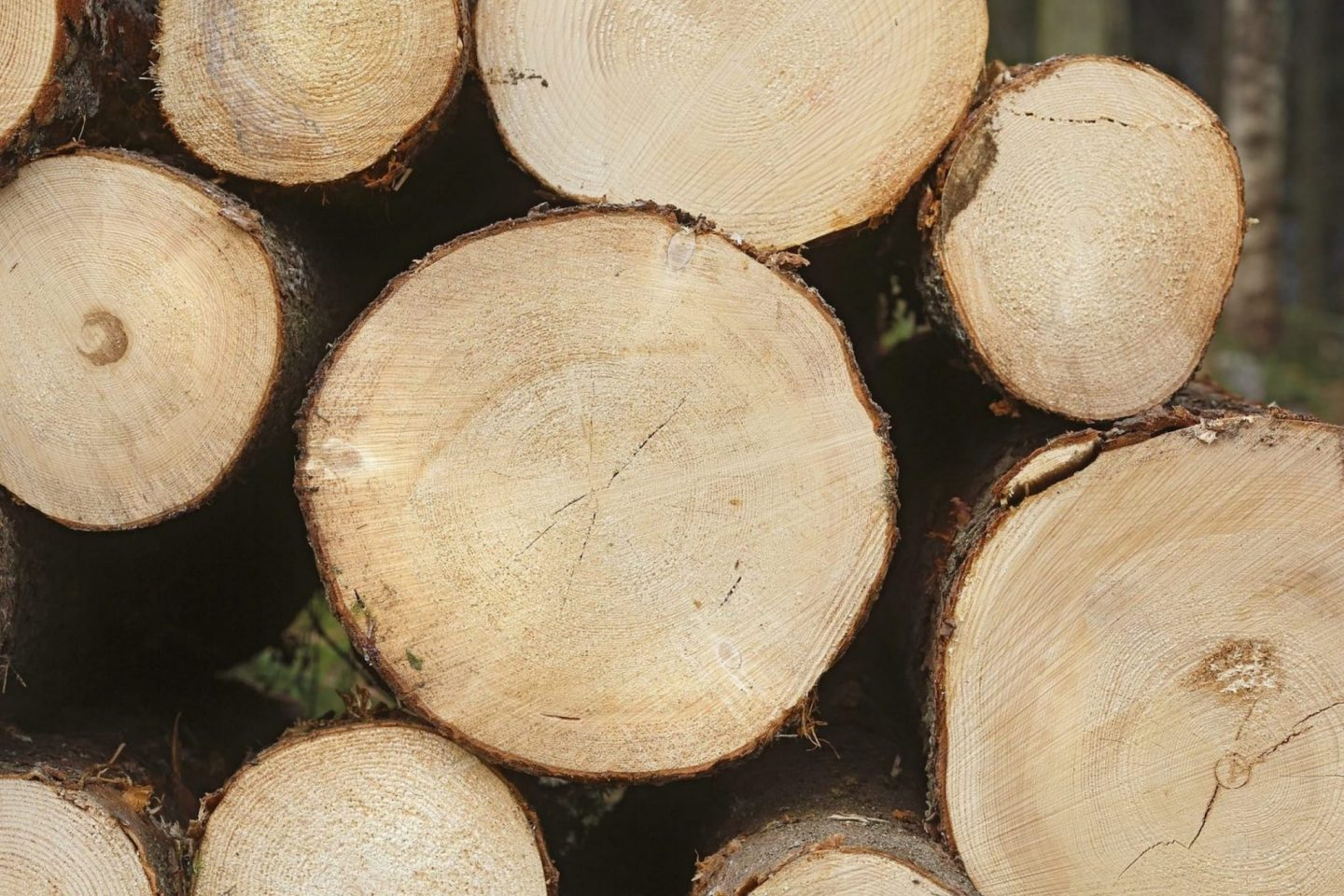 Austrian timber prices – 48 % up in one year!