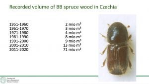 Is the bark beetle still here