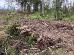 What do we do to protect the forest