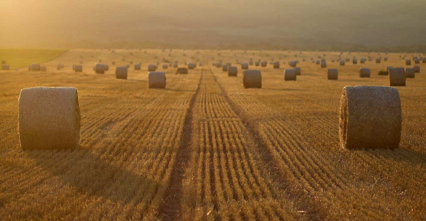 Paper from straw – 20 % less climate footprint